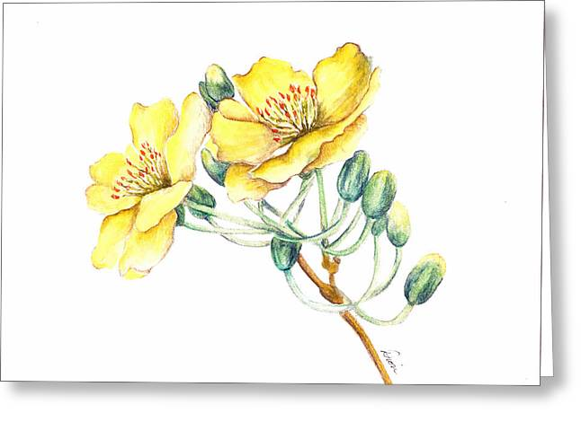 Apricot Blossom Greeting Card by Dion Dior