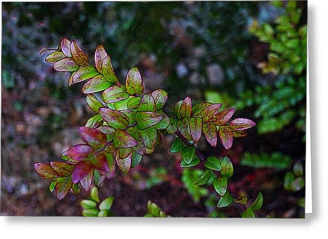 New Growth Huckleberry Preserve Greeting Card by Paul Bassen