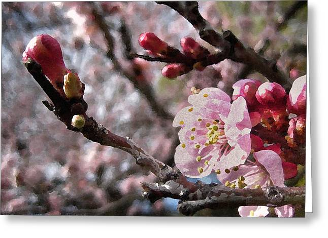 Apricot Floral Greeting Card by Kathy Bassett