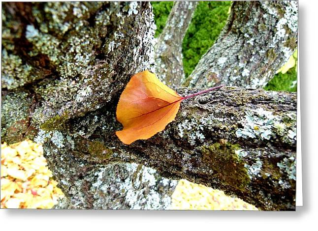 Apricot Leaf And Lichen Greeting Card by Will Borden