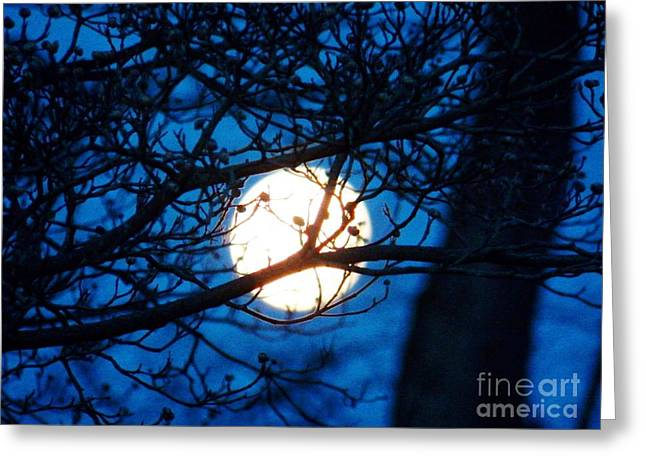 April Morning Moon Greeting Card by Judy Via-Wolff