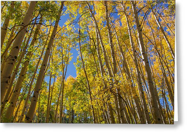Apsen Canopy Greeting Card by Aaron Spong