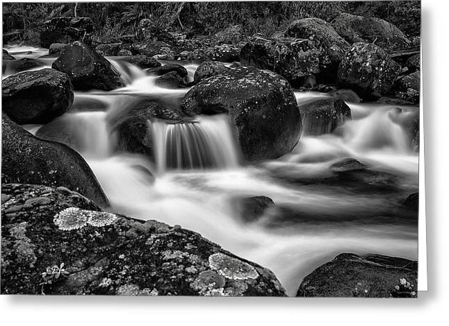 Aqua Mystic  Greeting Card by Mark Lucey
