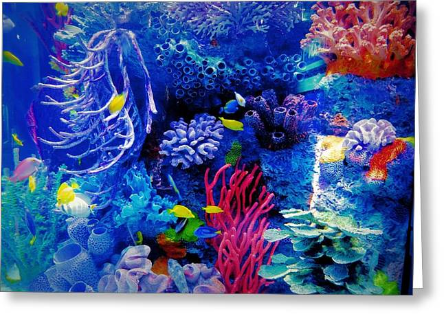 Aquarium Color Greeting Card by Dan Sproul