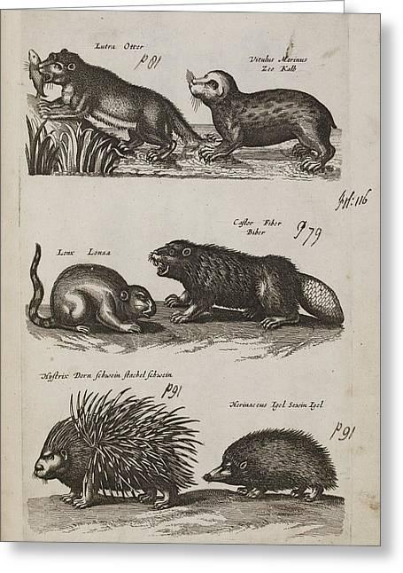 Aquatic Animals Greeting Card by British Library