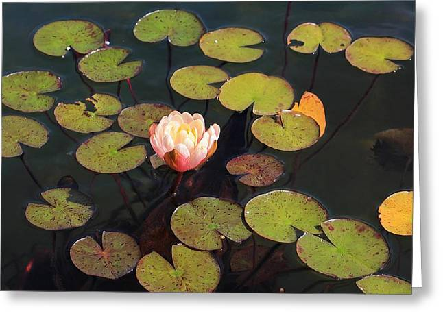 Aquatic Garden With Water Lily Greeting Card