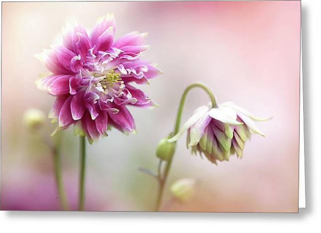 Aquilegia Flowers Greeting Card