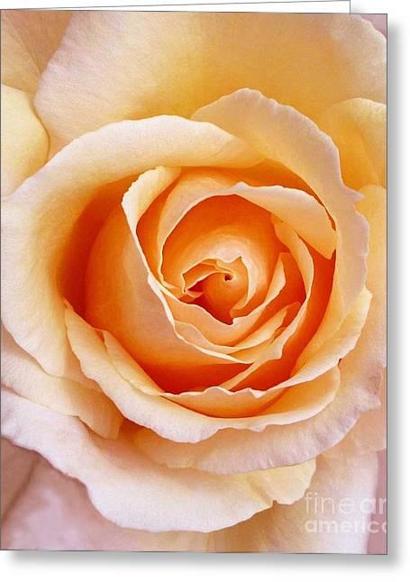 Aranciata Rose Blossom Greeting Card