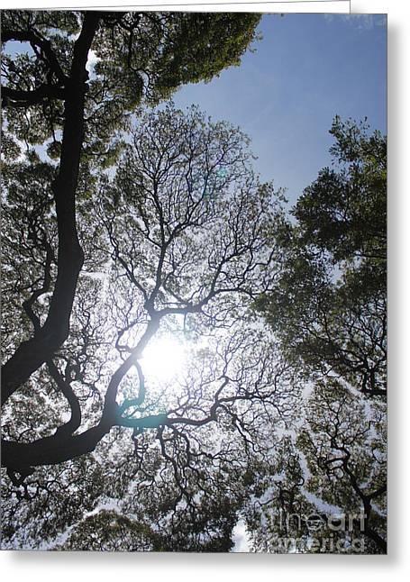 Arboreal Filigree Greeting Card