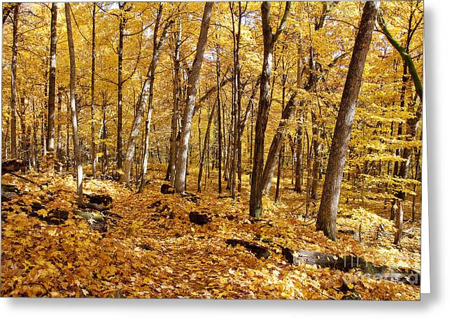 Arboretum Trail Greeting Card by Steven Ralser