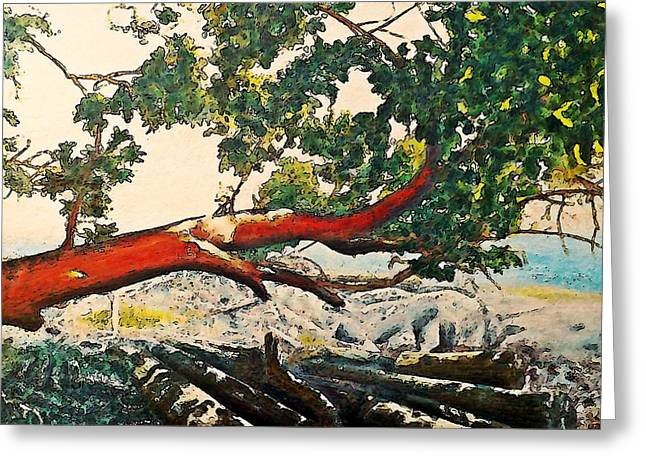 Arbutus Over Beach Greeting Card