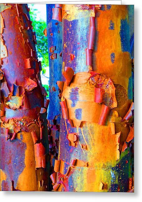 Arbutus Tree Summer Greeting Card by Laurie Tsemak