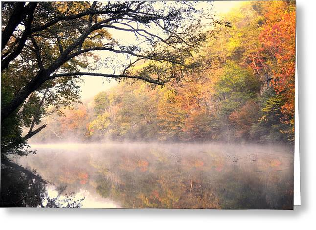Greeting Card featuring the photograph Arching Tree On The Current River by Marty Koch