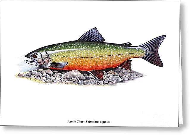 Arctic Char Male Greeting Card