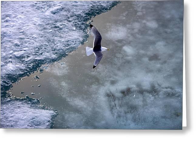 Arctic Flight Greeting Card