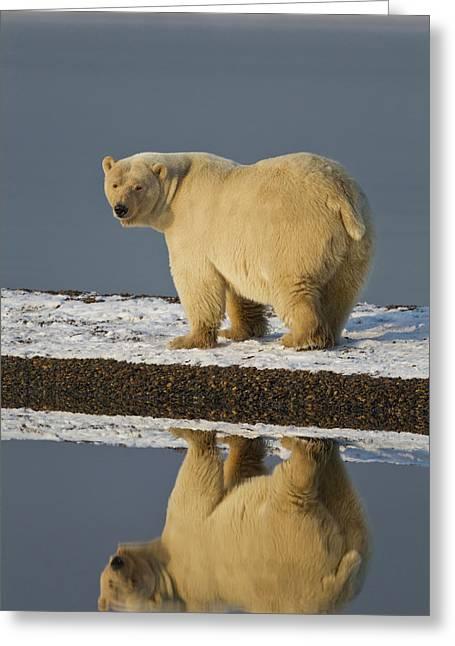 Arctic National Wildlife Refuge (anwr Greeting Card