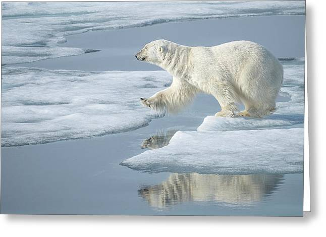 Arctic Ocean, Norway, Svalbard Greeting Card