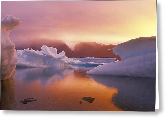 Arctic Splendour Greeting Card by Ralph Brunner