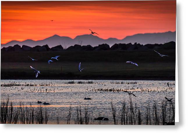 Arctic Terns And Ducks Greeting Card by Panoramic Images