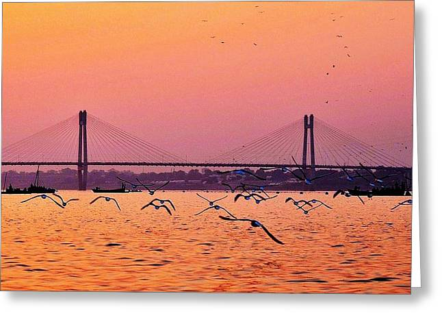 Arctic Terns At Sunset On The Ganges - Allahabad India Greeting Card by Kim Bemis