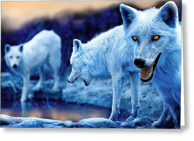 Arctic White Wolves Greeting Card by Mal Bray