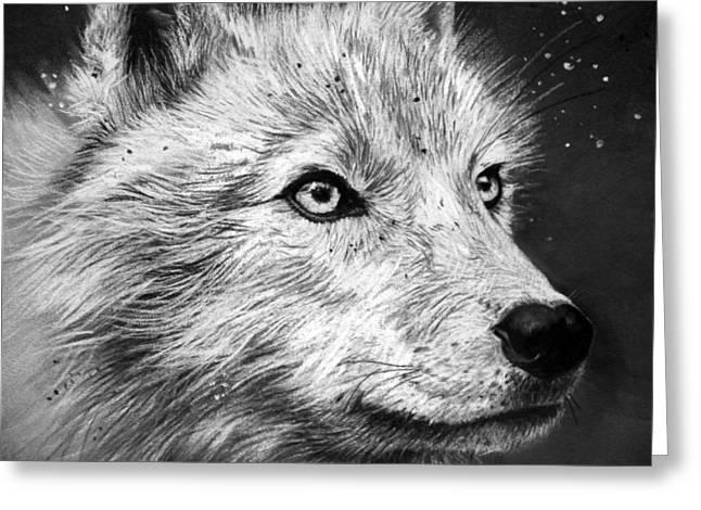 Arctic Wolf Greeting Card by Sharlena Wood