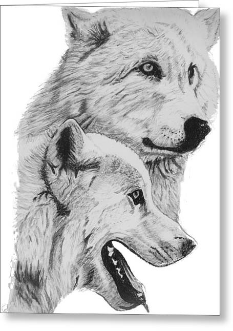 Arctic Wolves Drawing Greeting Card by Catherine Roberts
