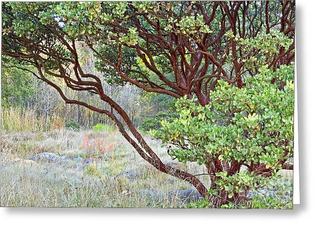 Greeting Card featuring the photograph Arctostaphylos Hybrid by Kate Brown