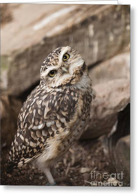 Are You Looking At Me? Greeting Card by Anne Gilbert
