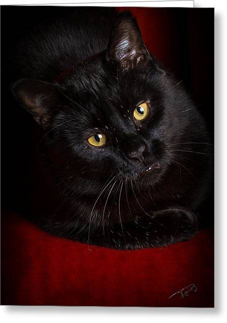 Aren't I Too Beautiful To Behold Greeting Card by Tom Buchanan