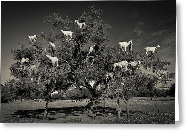 Argan Loving Goats Greeting Card by Dario Puebla