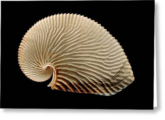 Argonaut Octopus Eggcase Shell Greeting Card by Gilles Mermet