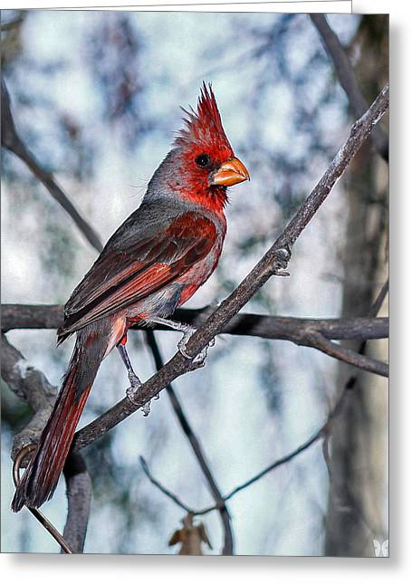 Arizona Cardinal Greeting Card