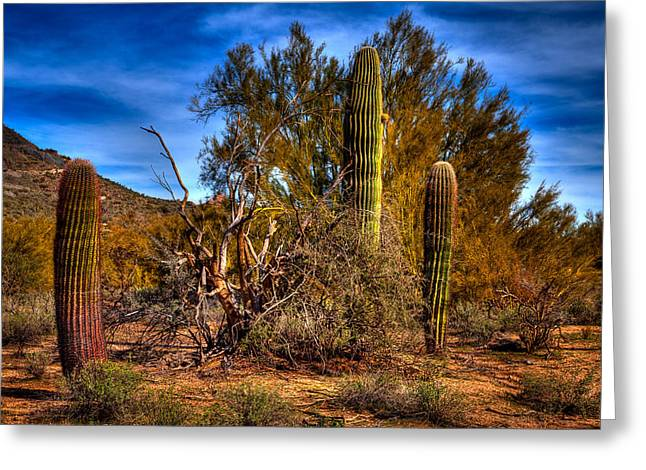 Arizona Landscape II Greeting Card by David Patterson