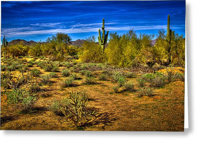 Arizona Landscape Iv Greeting Card by David Patterson