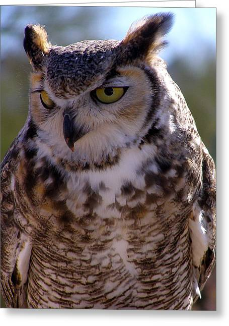 Arizona Owl Visit  Greeting Card