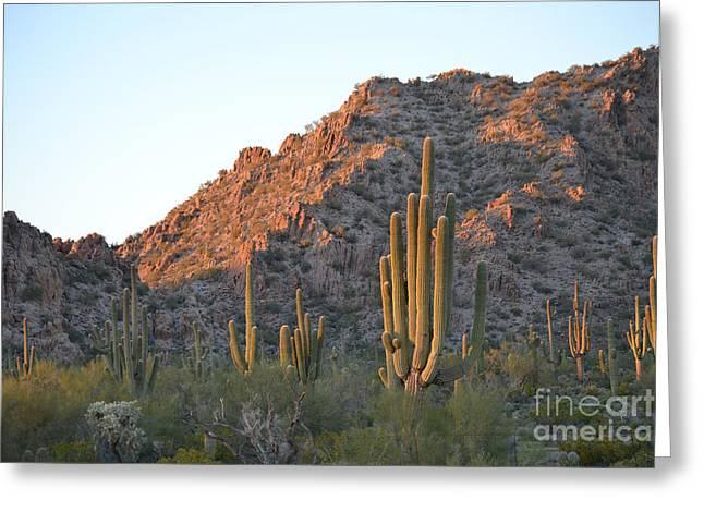 Arizona Saguaro Cactus  Greeting Card