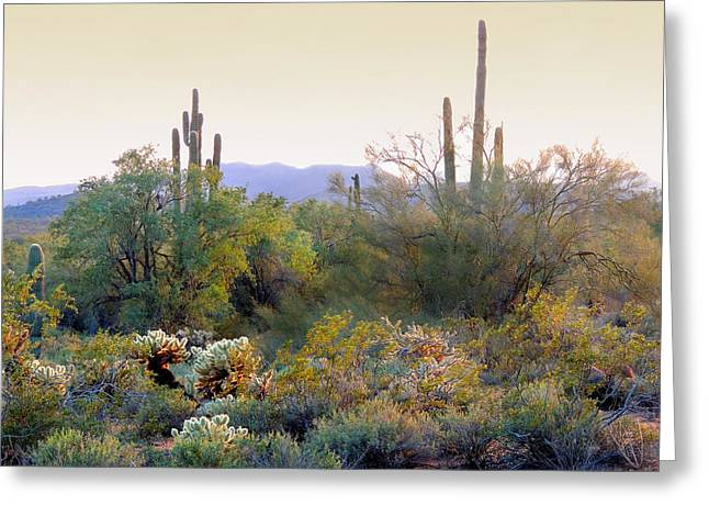 Arizona Spirit Greeting Card by Gordon Beck