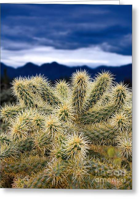 Arizona Teddy Bear Cactus Greeting Card