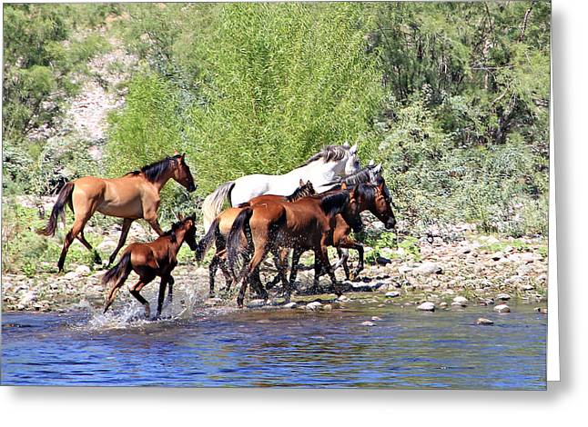 Arizona Wild Horse Family Greeting Card