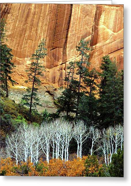 Arizona's Betatkin Aspens Greeting Card by Ed  Riche