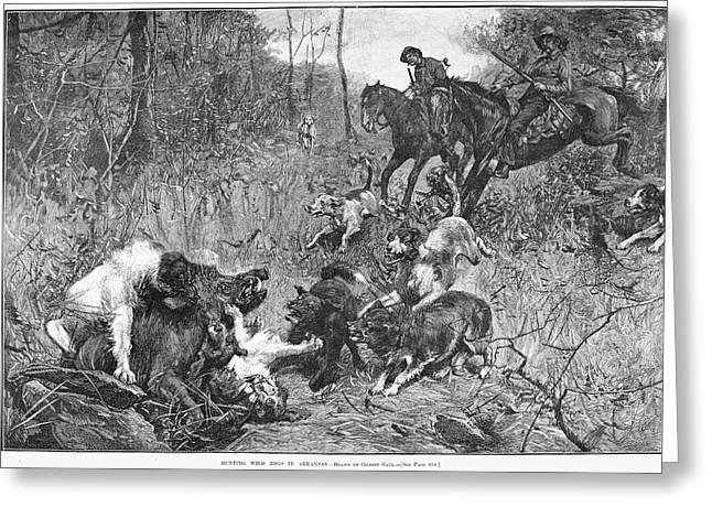 Arkansas Boar Hunt, 1887 Greeting Card by Granger