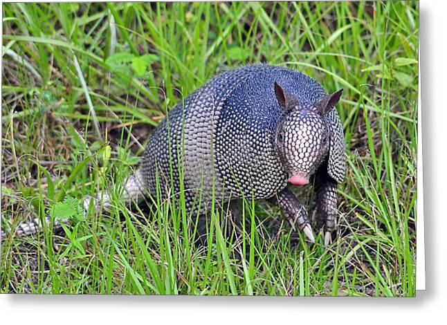 Armadillo Attitude Greeting Card by Al Powell Photography USA