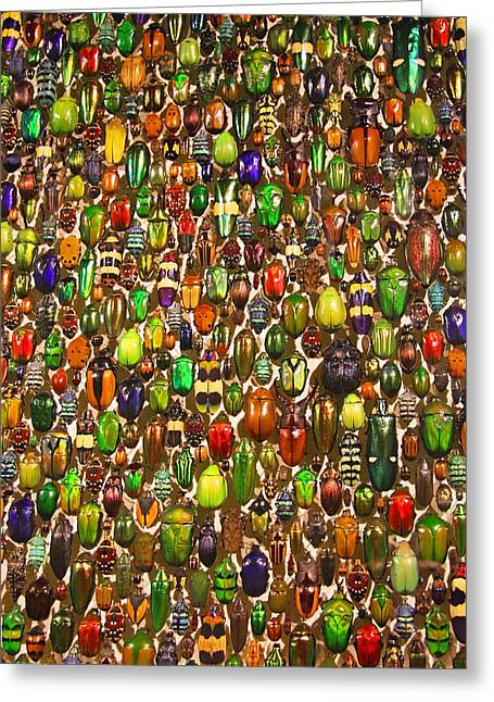 Army Of Beetles And Bugs Greeting Card by Brooke T Ryan