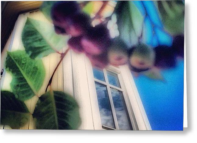 #aronia #buske #trädgård #hus #hem Greeting Card