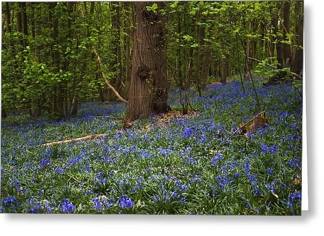 Around A Tree Greeting Card by Svetlana Sewell