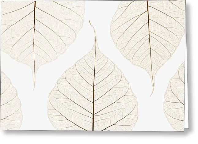 Arranged Leaves Greeting Card by Kelly Redinger