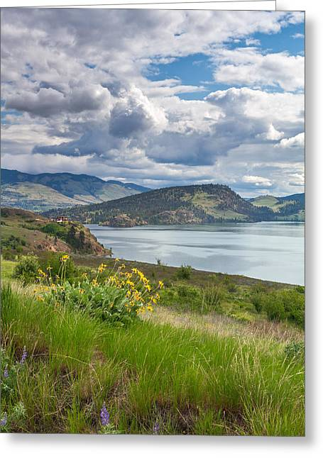 Arrowleaf Balsamroot At Kalamalka Lake Greeting Card by Michael Russell