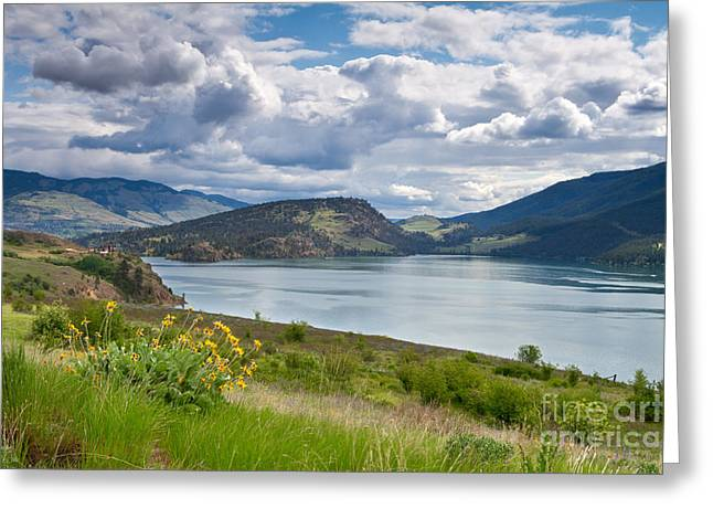 Arrowleaf Balsamroot By Kalamalka Lake Greeting Card by Michael Russell
