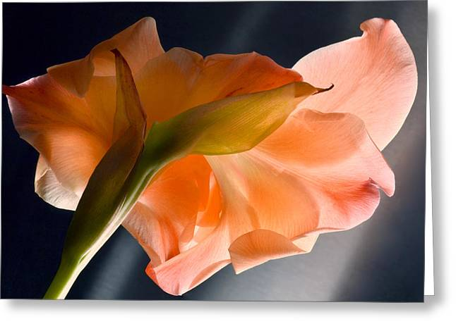Art Of Gladiolus. Greeting Card by Terence Davis